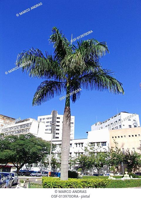 a natural green palm tree at espirito santo park