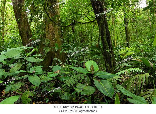 Costa Rica. Tenorio, National park Volcan Tenorio