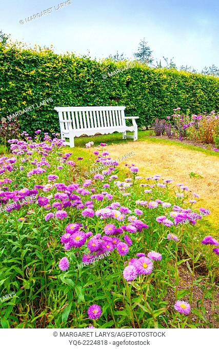 Beautiful summer garden with white bench and violet flowers on summer day. Picture taken outside the Geilston Garden, Cardross, Dunbarton in Scotland