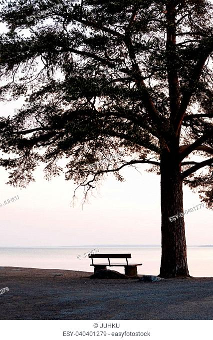 empty bench and big tree silhouette viewing to a lake