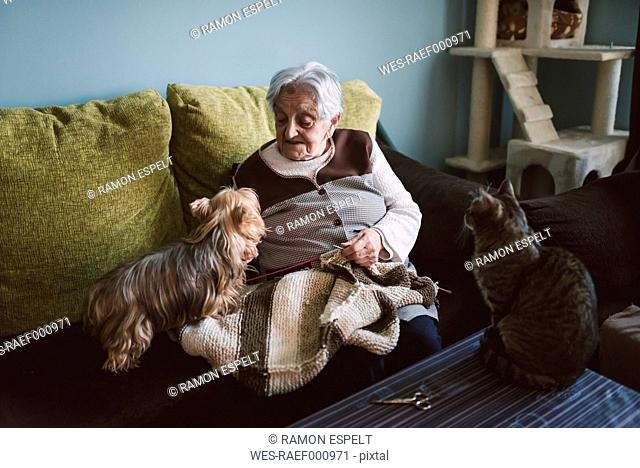 Senior woman sitting on the coach of her living room with her Yorkshire Terrier while her cat watching them