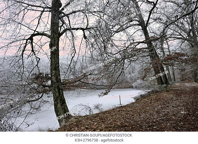 ''Etang Neuf'' iced pond in the Forest of Rambouillet, Haute Vallee de Chevreuse Regional Natural Park, Yvelines department, Ile de France region, France