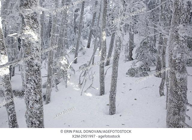 Scenic views along the Appalachian Trail (Carter-Moriah Trail) in winter conditions near Carter Dome in the White Mountains, New Hampshire USA