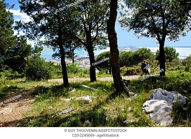 Tourists Trees,parc panoramique des Pierres Blanches, Saint Clair mount, Sete, Herault 34, Languedoc-Roussillon region, France