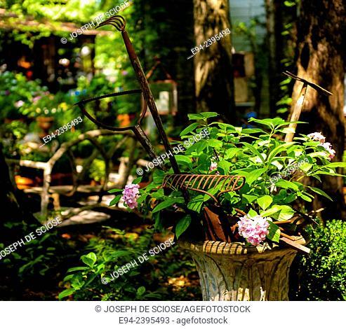 A flowering hydrangea in a container with antique garden tools in a garden.Georgia USA