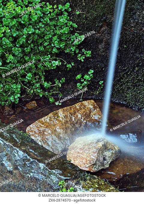Detail of Coll de Te Fountain. Montseny Natural Park. Barcelona province, Catalonia, Spain