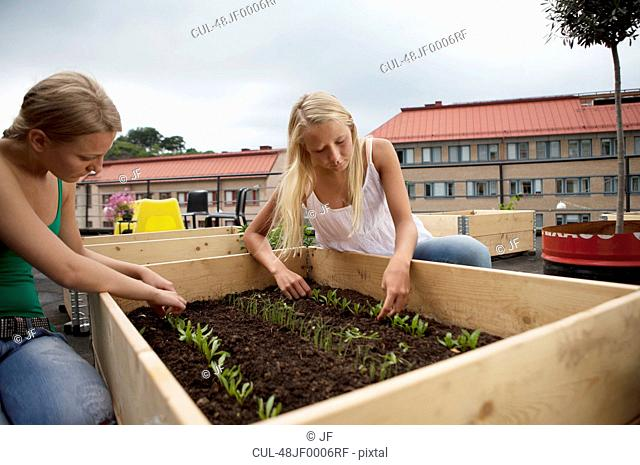 Teenage girls working in plant box