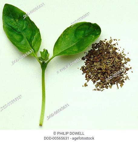 Fresh Basil leaf beside chopped dried herbs