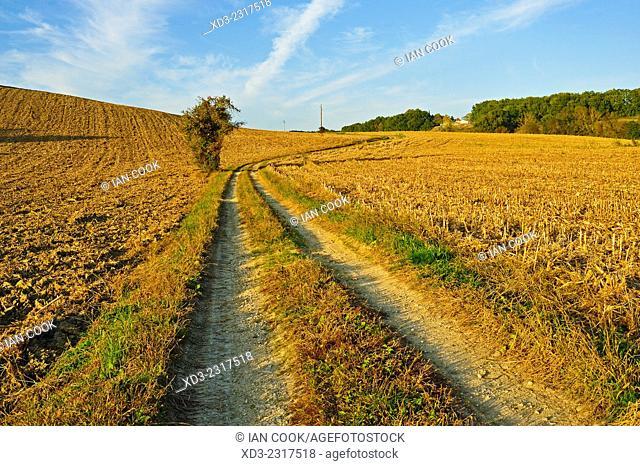 single tree beside dirt track through corn field after autumn harvest, Dordogne Department, Aquitaine, France