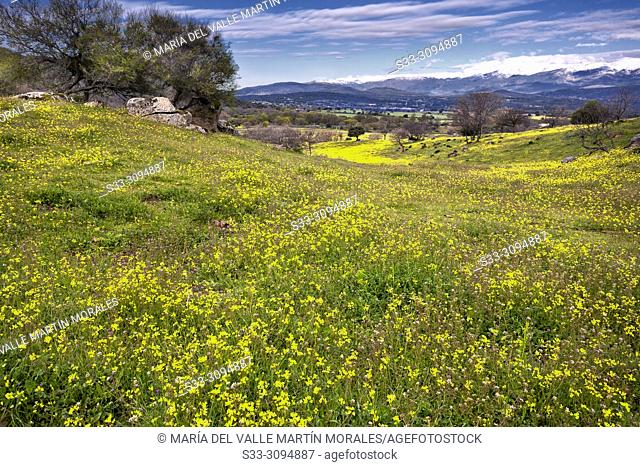Spring at the meadows of Higuera de las Dueñas and Sierra de Gredos on the background. Avila. Spain