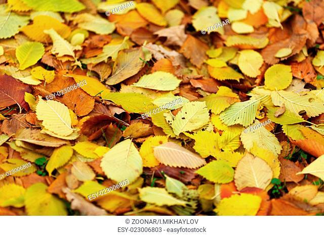 water drop on orange autumn leaf