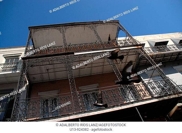 Doves flying in Bourbon Street, French Quarter, New Orleans, Louisiana, USA