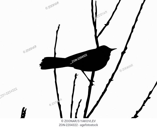 vector drawing bird on branch