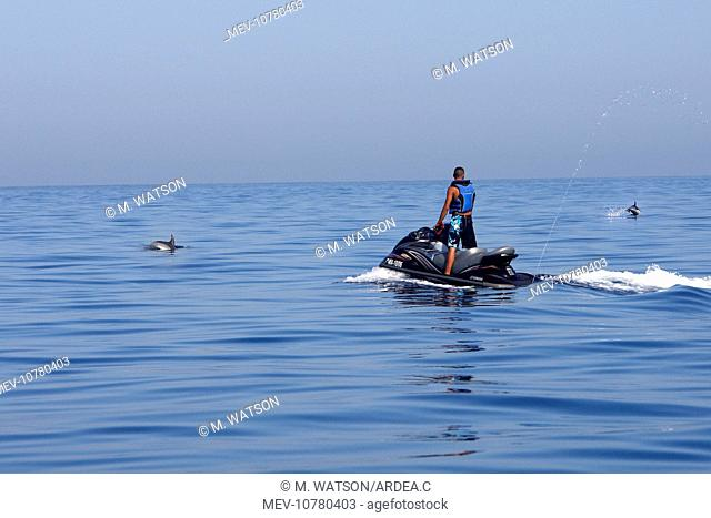 Common Dolphin - swimming with Jet ski in the strait of Gibraltar. (Delphinus delphis)