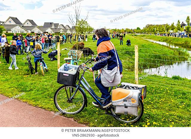 Roosendaal - Netherlands - Cool woman male courier person character riding bicycle with delivery box. Courier bicycle delivery service