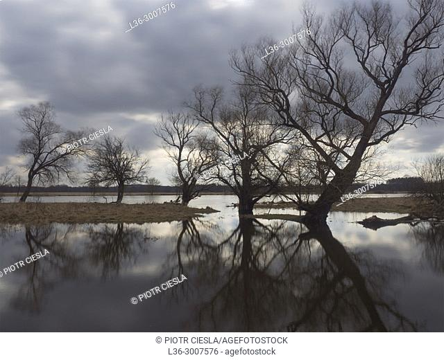 Poland. Early spring. High water. Bug river