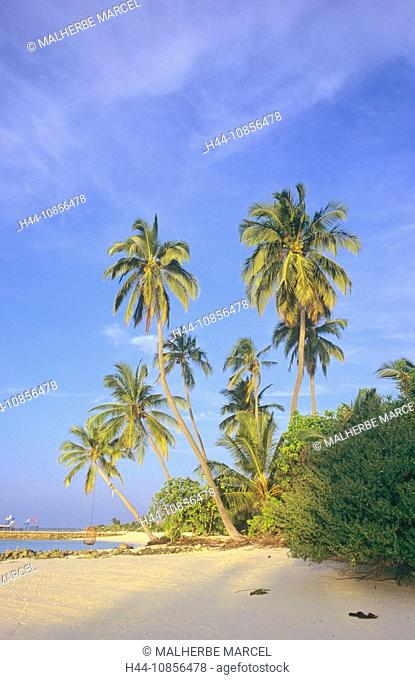 10856478, Maldives, Indian Ocean, South Ari Atoll