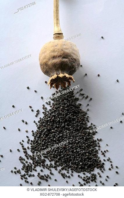 Poppy head and poppy seeds