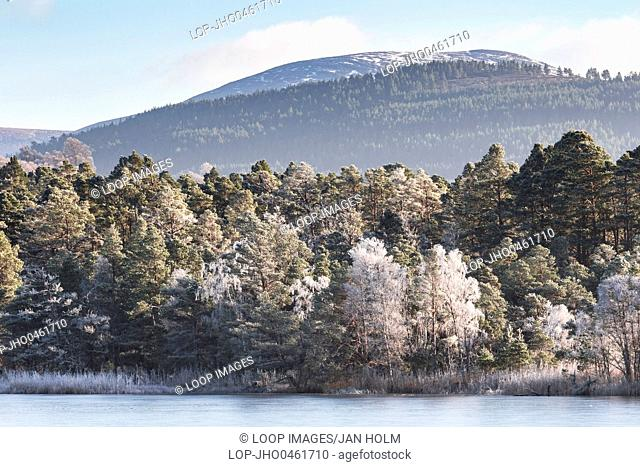 Frosted trees on Loch Garten in the Cairngorms National Park of Scotland