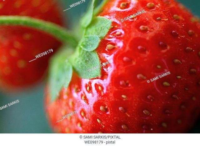 Red strawberries (fragaria ananassa) in garden