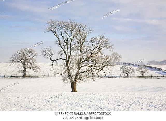 Trees in snowy landscape near Lochmaben, Dumfries and Galloway, Scotland