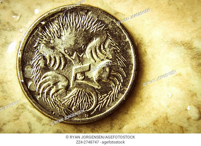 Isolated metal round Australian coin with illustration of porcupine and number five