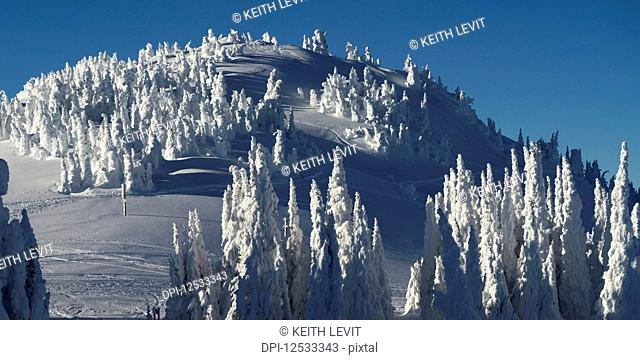 Coniferous trees covered in heavy snow on a mountain; Thompson-Nicola P, British Columbia, Canada