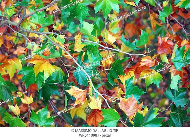 Tree twigs in autumn