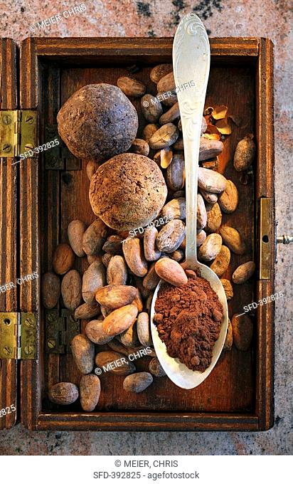 Roasted cocoa beans and cocoa powder in spoon