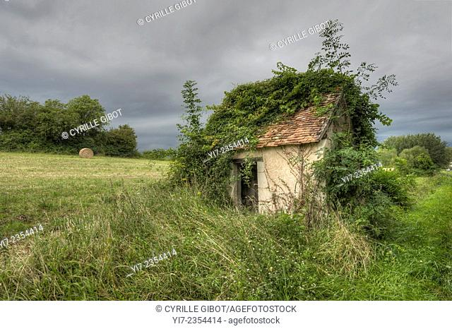Abandoned cabin in field with overgrown vegetation, Indre-et-Loire, France