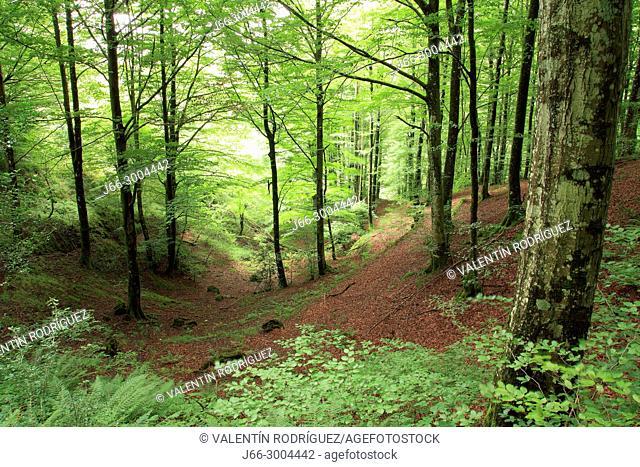 Beech landscape on the way from Ataum Lizarrusti to lake Lareo and Zara Enirio. Natural park Sierra Aralar. Navarra