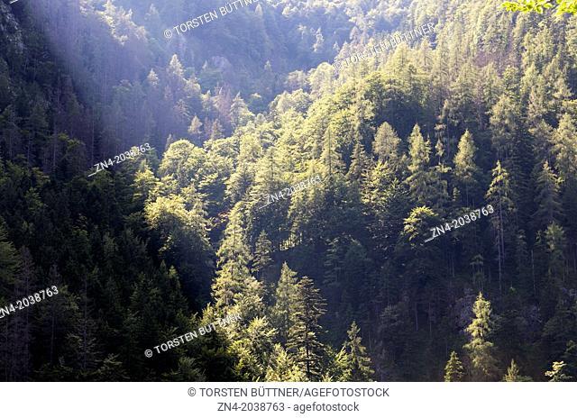Sunset Illuminating Mixed Forests on Limestone Alps in Kalkalpen National Park. Austria