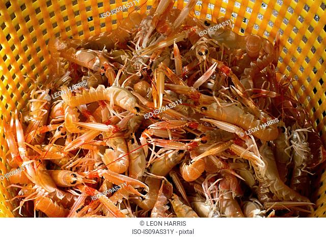 Basket of shellfish