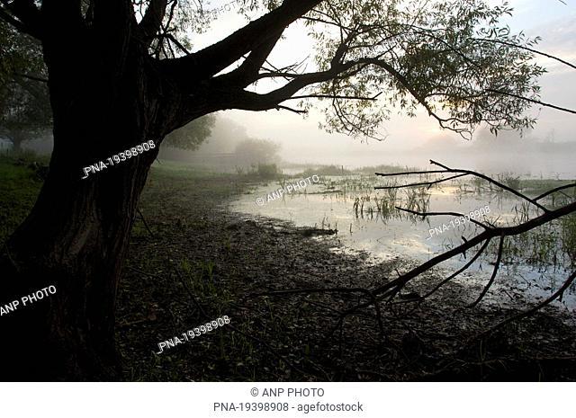 Biebrza National Park, Biebrzanski Park Narodowy, Narew river, Podlaskie, Podlachia, Poland, Europe