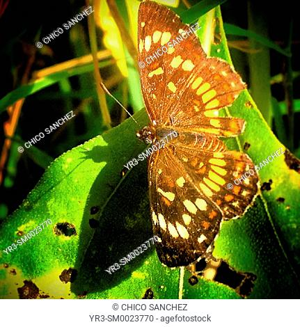 A butterfly perches on a green leaf in Tekax, Yucatan Peninsula, Mexico