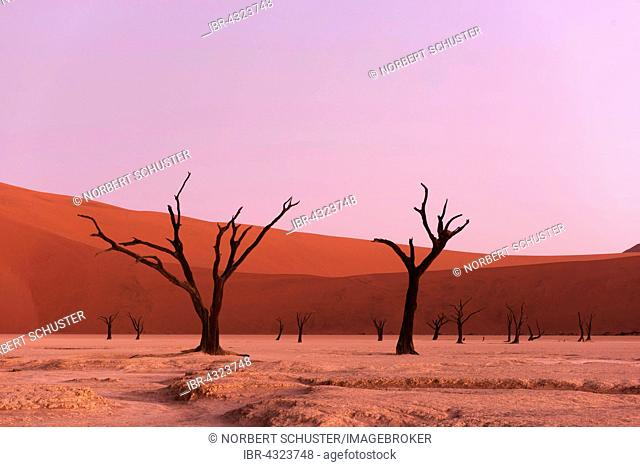 Deadvlei in the evening light, dead camel thorn trees (Acacia erioloba), Sossusvlei, Namib-Naukluft National Park, Namib Desert, Namibia