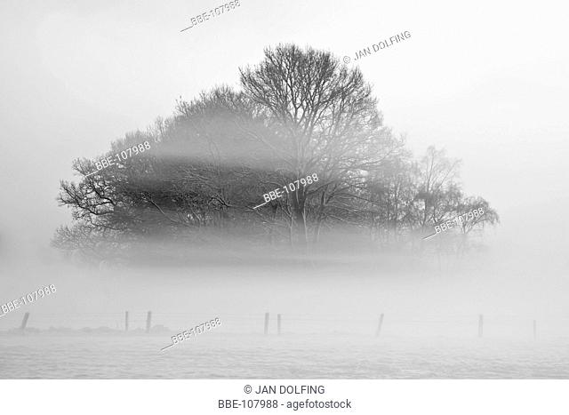 group of wintery trees in the fog