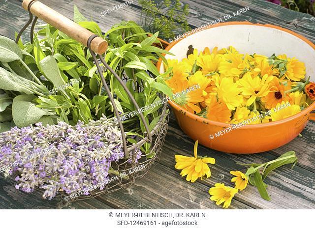 Freshly picked tea herbs: lavender, sage, lemon verbena and marigolds