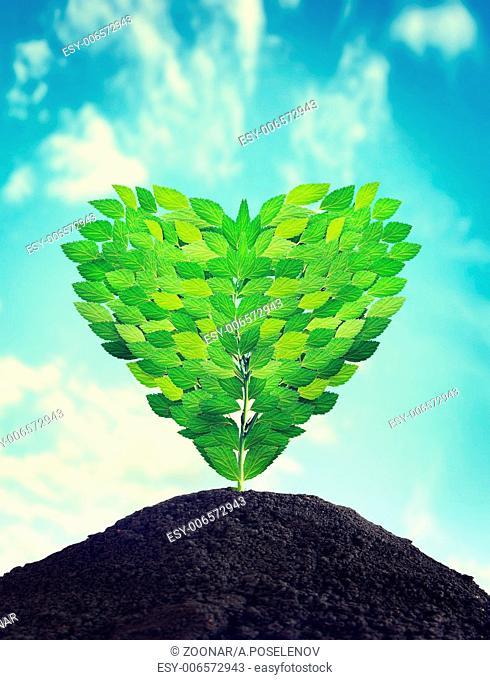 Sapling as a heart grows outdoor