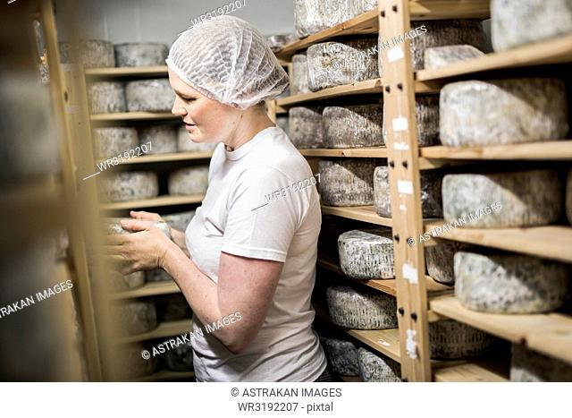 Woman putting cheese on maturing rack