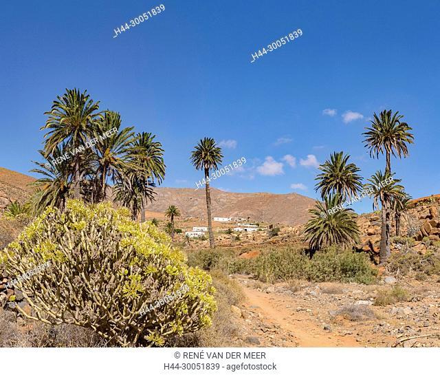 The Palm valley of the Barranco de las Penitas, Vega de Rio Palmas, Spain Spain