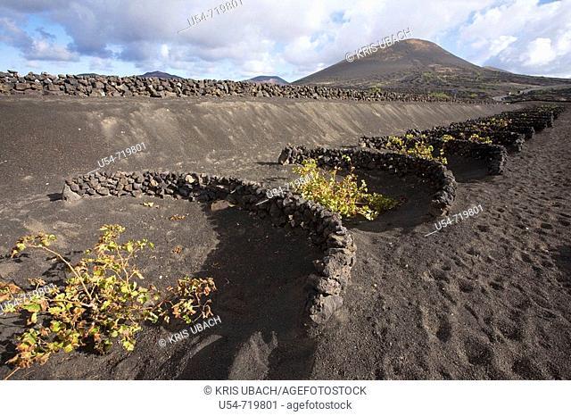 Spain, Canary Islands, Lanzarote, La Geria, vineyards growing on volcanic soil