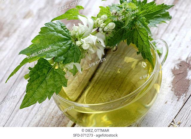 A cup of white dead-nettle tea