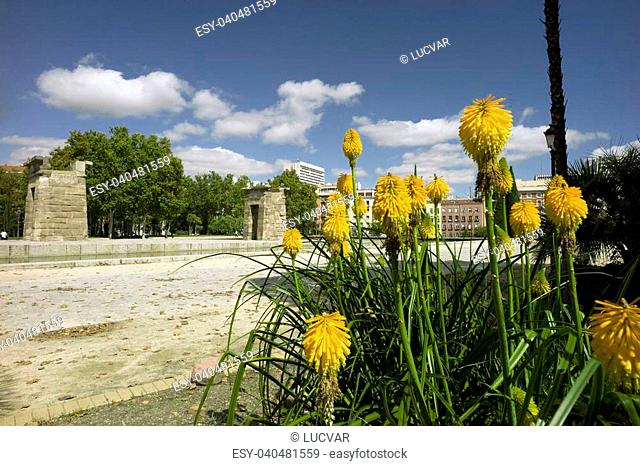 Yellow flowers and the egyptian temple of Debod at the background