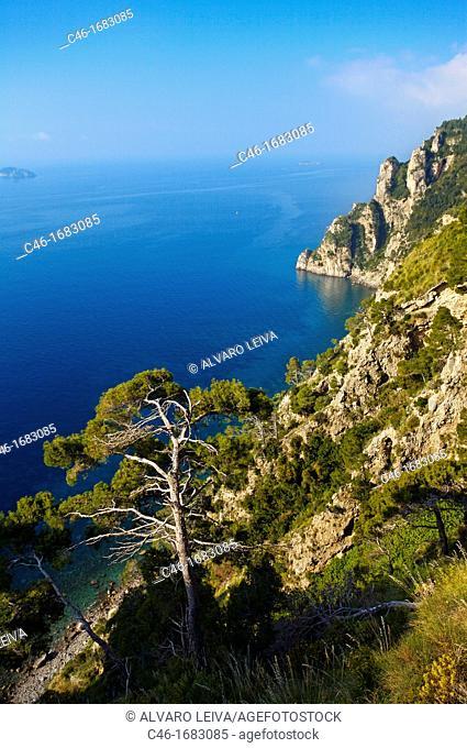 Amalfi coast near Positano  Campania  Italy