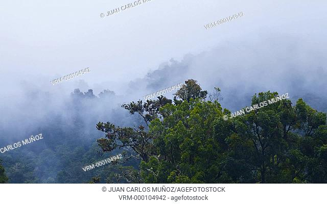 Cloud forest, Quetzales National Park, Costa Rica, Central America, America