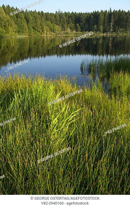 Anderson Lake, Anderson Lake State Park, Washington