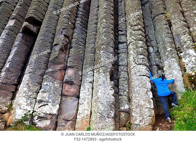 Organ Pipes Basalt Columns  The Giant's Causeway  World Heritage Site  Causeway Coastal Route  Antrim County, Northern Ireland, Europe