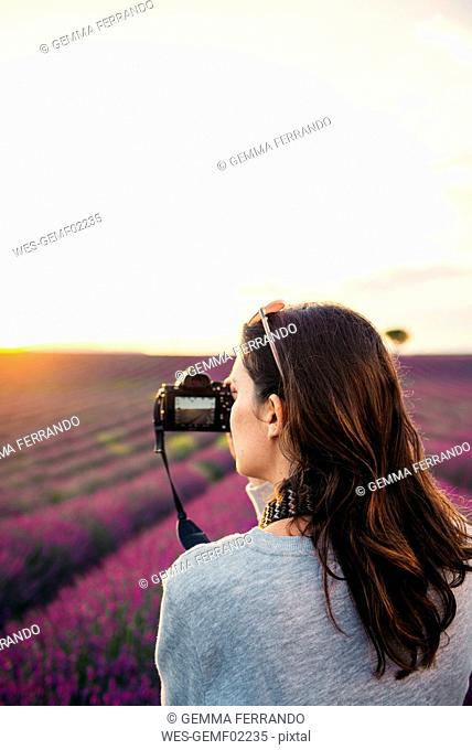 France, Valensole, woman taking photos with camera in front of lavender field at sunset