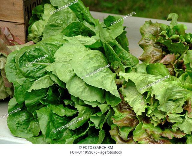 Montpelier, VT, Vermont, Farmer's Market, Green Leaf Lettuce